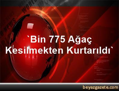 'Bin 775 Ağaç Kesilmekten Kurtarıldı'