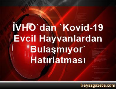 İVHO'dan 'Kovid-19 Evcil Hayvanlardan Bulaşmıyor' Hatırlatması