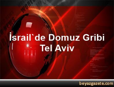 İsrail'de Domuz Gribi Tel Aviv