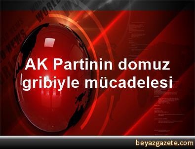 AK Partinin domuz gribiyle mücadelesi