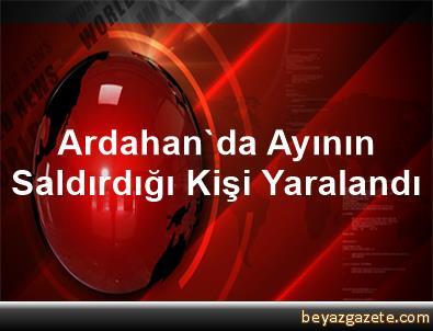 Ardahan'da Ayının Saldırdığı Kişi Yaralandı