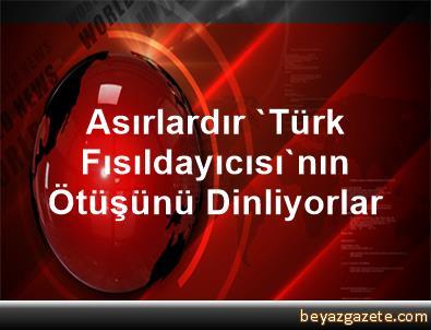 Asırlardır 'Türk Fısıldayıcısı'nın Ötüşünü Dinliyorlar