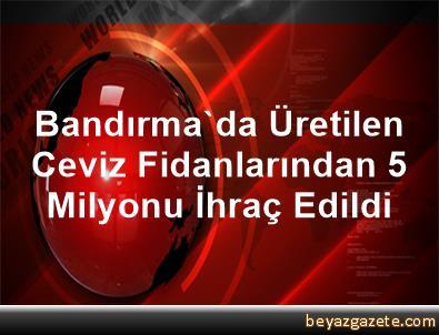 Bandırma'da Üretilen Ceviz Fidanlarından 5 Milyonu İhraç Edildi