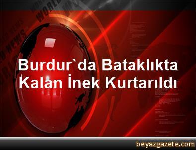 Burdur'da Bataklıkta Kalan İnek Kurtarıldı