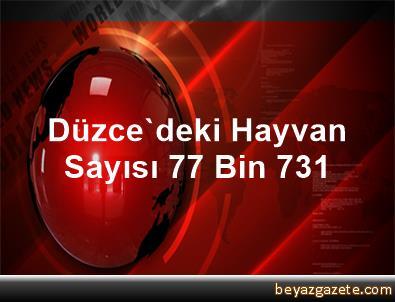 Düzce'deki Hayvan Sayısı 77 Bin 731