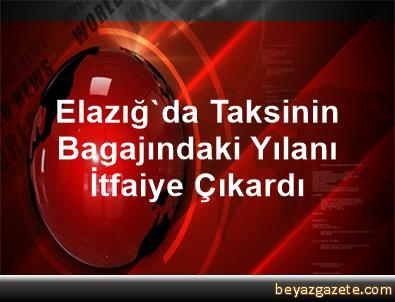 Elazığ'da Taksinin Bagajındaki Yılanı İtfaiye Çıkardı