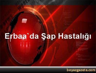 Erbaa'da Şap Hastalığı