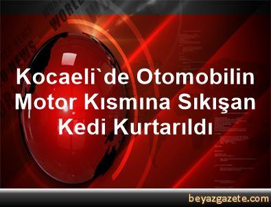 Kocaeli'de Otomobilin Motor Kısmına Sıkışan Kedi Kurtarıldı