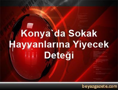 Konya'da Sokak Hayvanlarına Yiyecek Deteği