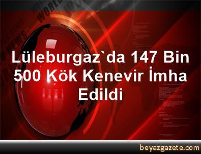 Lüleburgaz'da 147 Bin 500 Kök Kenevir İmha Edildi