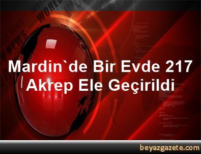 Mardin'de Bir Evde 217 Akrep Ele Geçirildi