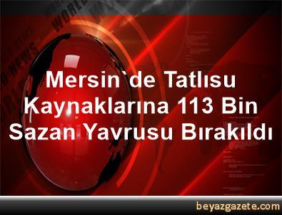 Mersin'de Tatlısu Kaynaklarına 113 Bin Sazan Yavrusu Bırakıldı