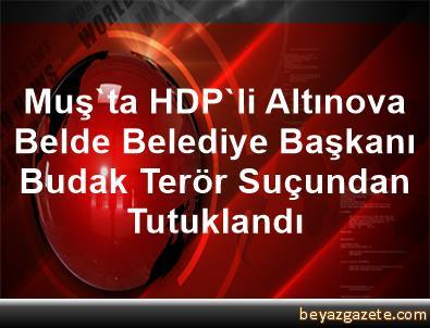 Muş'ta HDP'li Altınova Belde Belediye Başkanı Budak Terör Suçundan Tutuklandı
