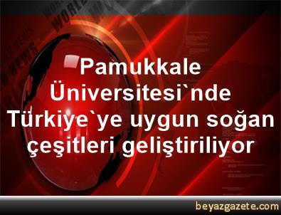 Pamukkale Üniversitesi'nde Türkiye'ye uygun soğan çeşitleri geliştiriliyor