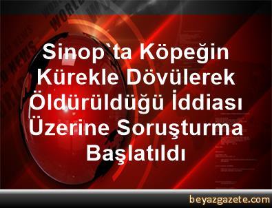 Sinop'ta Köpeğin Kürekle Dövülerek Öldürüldüğü İddiası Üzerine Soruşturma Başlatıldı