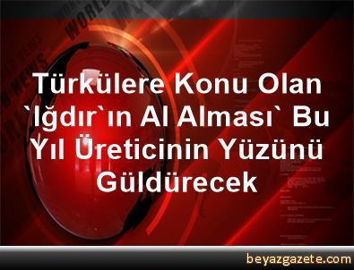 Türkülere Konu Olan 'Iğdır'ın Al Alması' Bu Yıl Üreticinin Yüzünü Güldürecek