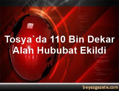 Tosya'da 110 Bin Dekar Alan Hububat Ekildi