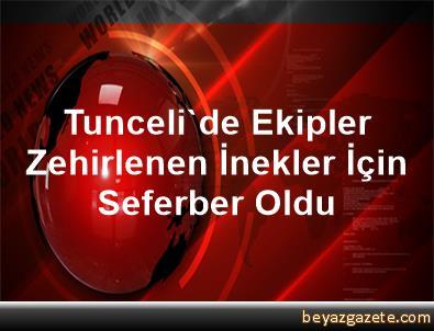 Tunceli'de Ekipler Zehirlenen İnekler İçin Seferber Oldu