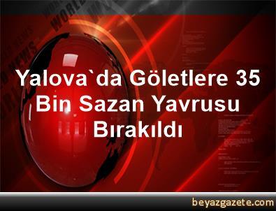 Yalova'da Göletlere 35 Bin Sazan Yavrusu Bırakıldı