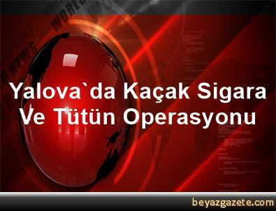 Yalova'da Kaçak Sigara Ve Tütün Operasyonu