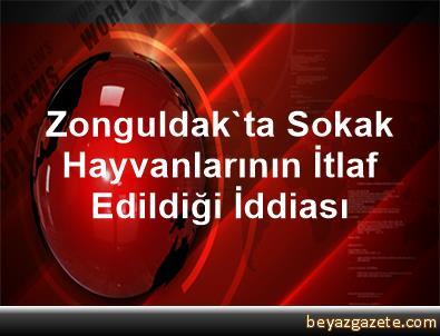 Zonguldak'ta Sokak Hayvanlarının İtlaf Edildiği İddiası
