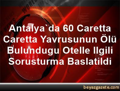 Antalya'da 60 Caretta Caretta Yavrusunun Ölü Bulundugu Otelle Ilgili Sorusturma Baslatildi