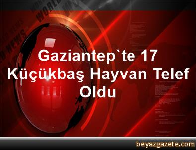 Gaziantep'te 17 Küçükbaş Hayvan Telef Oldu