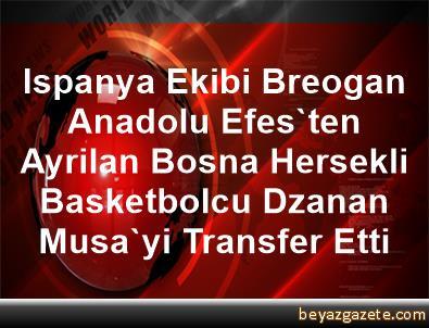 Ispanya Ekibi Breogan, Anadolu Efes'ten Ayrilan Bosna Hersekli Basketbolcu Dzanan Musa'yi Transfer Etti
