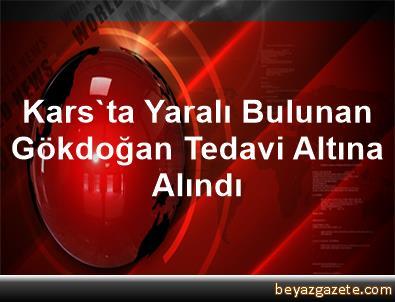Kars'ta Yaralı Bulunan Gökdoğan Tedavi Altına Alındı