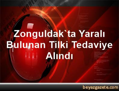Zonguldak'ta Yaralı Bulunan Tilki Tedaviye Alındı